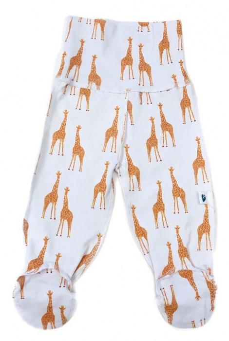 Повзунці, Жирафи